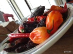 "Chilli Stand Off - Chillis used in the Tom Parker Bowles ""10 Alarm Chilli"""