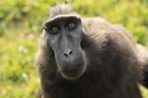 Monkey brains?