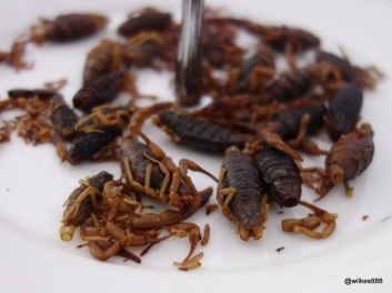 Rentokil Pestaurant - Black Scorpions... complete with stingers!