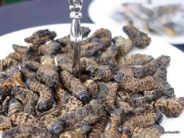 Rentokil Pestaurant - Smoked Emperor Moth Caterpillar