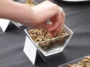 Rentokil Pestaurant - Sundried Emperor Moth Caterpillars