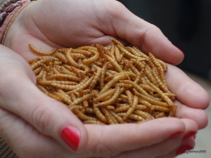 Rentokil Pestaurant - Crispy BBQ Mealworms