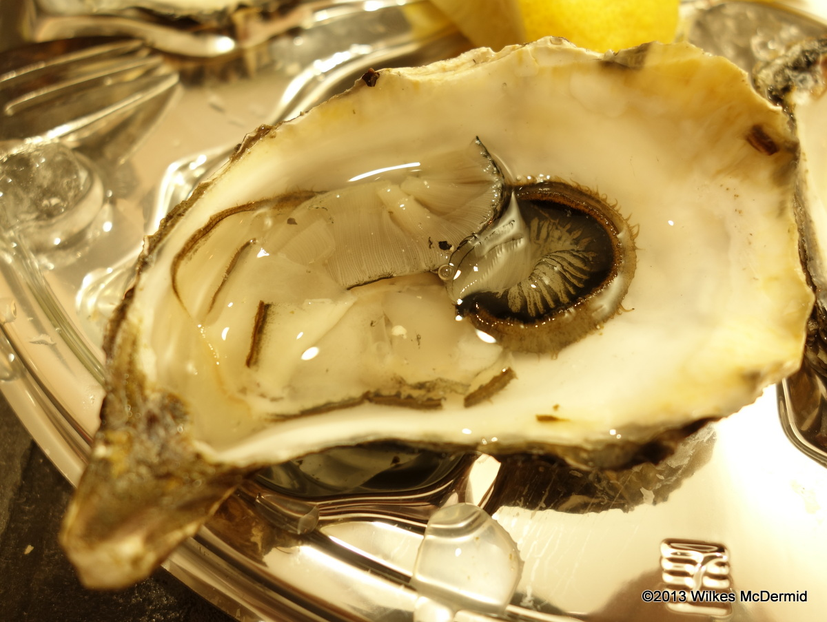 Pearl Dram – Oyster anatomy, confusing | @wilkes888 - London based ...