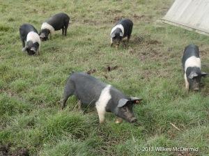 The Pig - Fresh pork