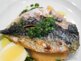 Grilled Mackerel... and with salsa
